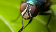 Eradicate  Flies