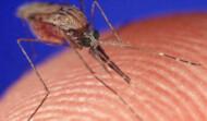 Eradicate  Mosquitos